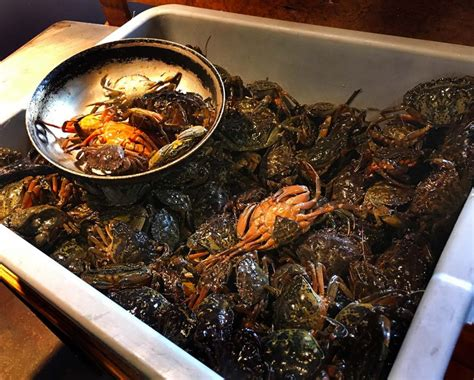 Some New England Chefs Are Putting This Invasive Crab On