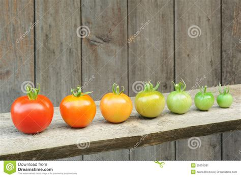 Evolution Of Red Tomato - Maturing Process Of The Fruit