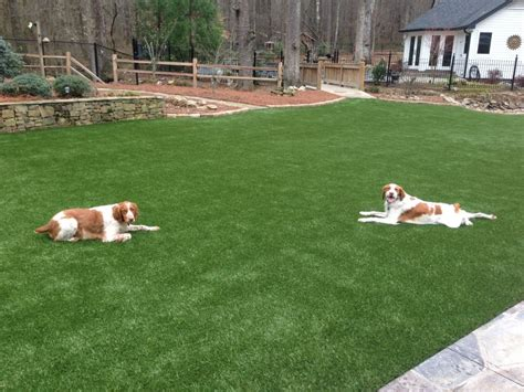 Fake Grass for Dogs & All Pets | Synthetic Turf International®